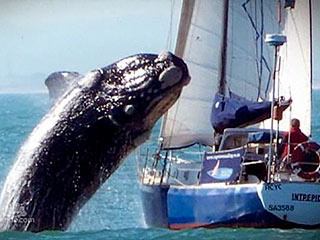 Couple Survive After Being Hit by 40-Ton Flying Whale