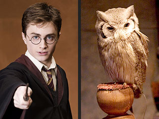 Harry Potter Causes Owl Problem in India