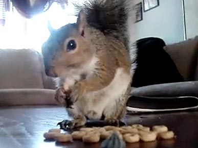 Tuesday's Funny Video: Squirrel Thinks He's a Cat!