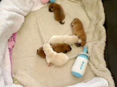 The Puppy Cam Returns with a New Litter!