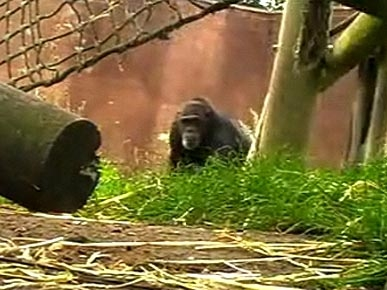 The Water Bowl: Chimps Film Their Own Documentary; Plus: Dog Scares Off Woman's Attacker!