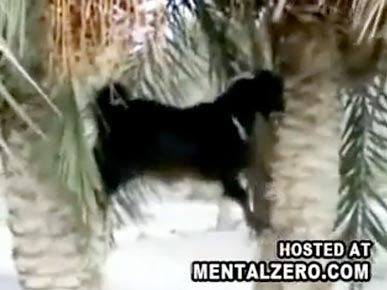 Monday's Funny Video: Goat Climbs a Tree!
