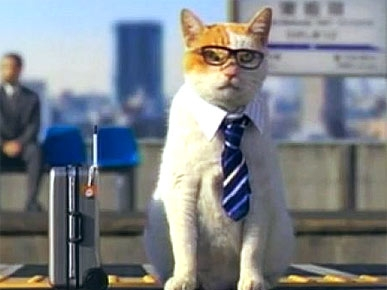 Tuesday&#39;s Funny Video: Businessman Kitty Seals the Deal!