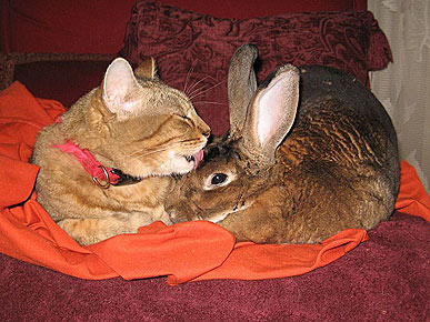 Caption Contest: Cat Takes Care of Bunny