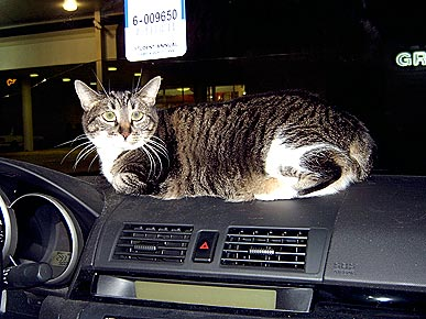 Animal D'Oh! Chasey the Cat Thinks She's a GPS