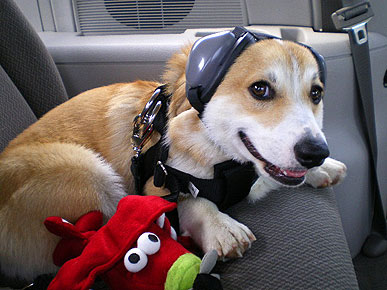 Hush, Puppies! Doggie Earmuffs Protect Sensitive Canine Ears