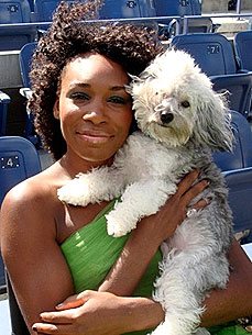 Venus Williams Loves Her &#39;Impulse Buy,&#39; Havanese Harold