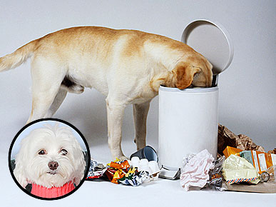Ask Ethel: Why Does My Dog Dig Through the Bathroom Trash?