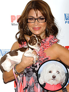 Ask Ethel: Paula Abdul's Chihuahua Has a Snoring Problem!