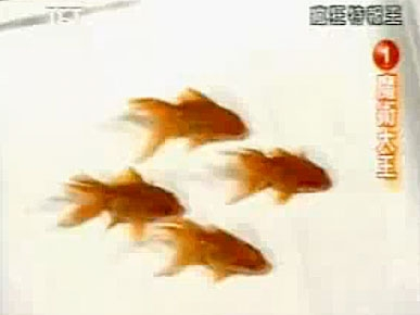 Monday&#39;s Funny Video: Synchronized Swimming with the Fishes