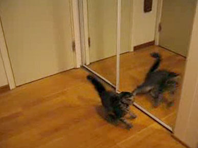 Tuesday's Funny Video: Cat Looks in Mirror, Doesn't Like What He Sees