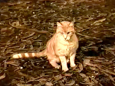 Thursday's Funny Video: Cat Lassie Isn't Like Dog Lassie