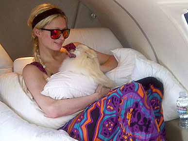 The Water Bowl: Paris Hilton's Dog Went to Vegas! Plus, Missing Cat Finds Owner Through Twitter