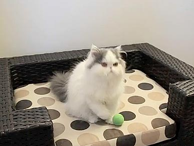 Tuesday's Funny Video: Cat Excels at Catching Balls