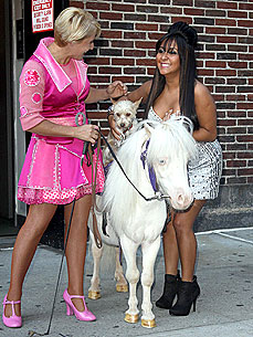 Snooki Meets a Dog Riding a Miniature Dancing Horse