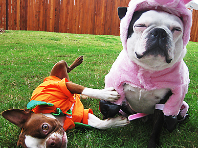 What Will Your Pet Be Wearing for Halloween?