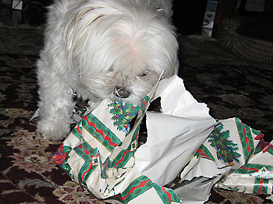 Animal D'Oh! Megan the Dog Unwraps Her Presents