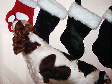 Animal D'Oh! Hoover Sniffs Out His Stocking Stuffers
