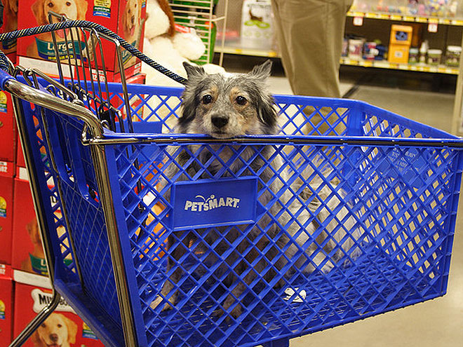 Pets Shop 'Til They Drop!