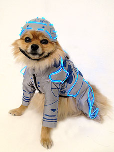 Tron Dog Is Taking Over Your Mainframe