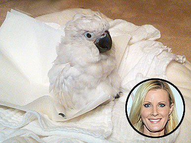 EXCLUSIVE: Meet Sandra Lee's New Pet Cockatoo