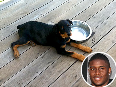 Reggie Bush Brings Home a Rottweiler Puppy!