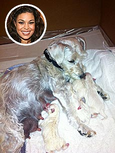 Special Delivery! Jordin Sparks's Dog Has 4 Puppies