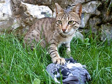 how to stop cats killing birds