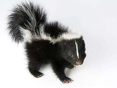 The Water Bowl: Skunks Are the New Hot Pet! Plus, Do You Really Know Senior Pet Food?