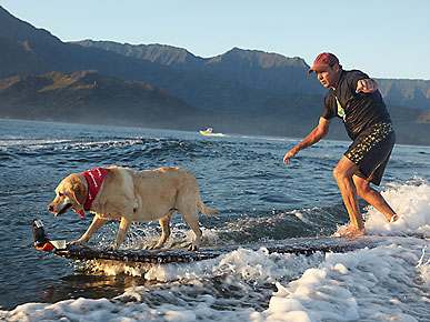 Surfing Legend Billy Hamilton Rides Waves with His Senior Dog
