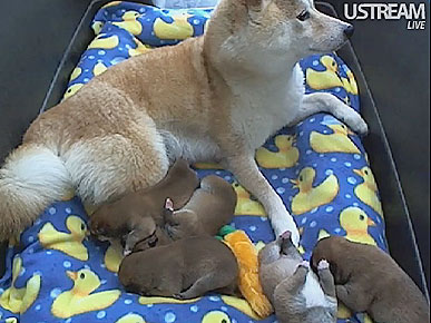 Procrastination Alert! The Puppy Cam Is Back!