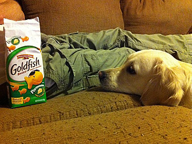 Caption Contest: Maggie Stares Longingly at Goldfish