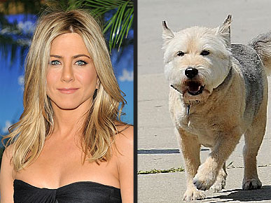 Sad News: Jennifer Aniston's Dog Norman Dies