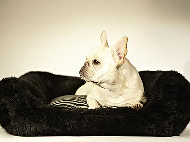 Get Comfy Snuggles Year-Round with Snub&#39;s New Dog Beds