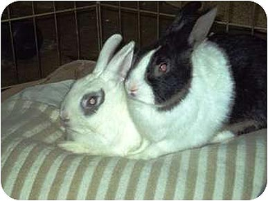 Adopt Me! Cosmo and Newman Want to Hop Around Your House