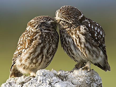 Sweet Photo: Little Owls, Big Love