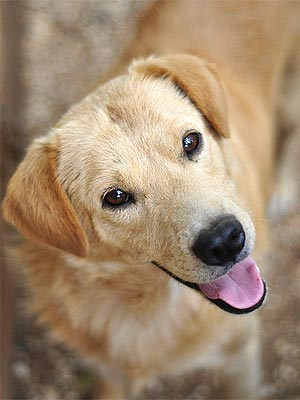 Adopt Me! Retriever Mix Bobby Is a Little Charmer