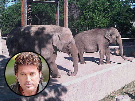 Billy Ray Cyrus Meets Elephants and Birds