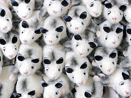 Heidi the Cross-Eyed Possum Gets Immortalized in Doll Form