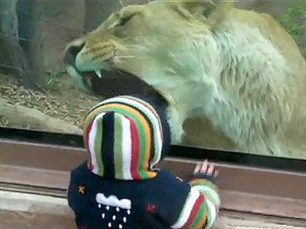 The Water Bowl: Lion Tries to Eat Baby at the Zoo!