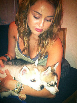 Miley Cyrus, Dogs Floyd and Willow Have Play Date