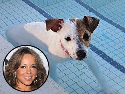 Mariah Carey's Post-Baby Workout with Dog (PHOTO)