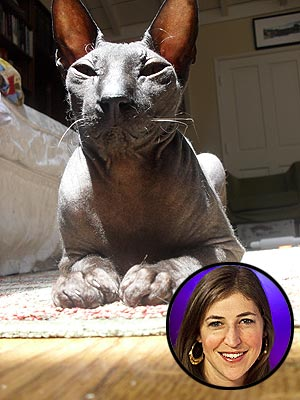 Mayim Bialik Forgets Her Pain – with Help from Her Cat