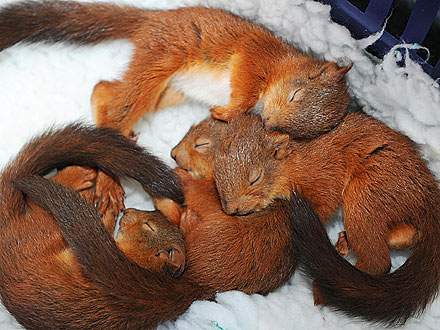 Sleepy Time! Squirrel Siblings Snuggle Up Together