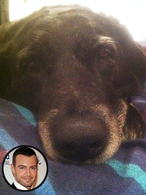 Joey Lawrence Rescues Dog from Australia