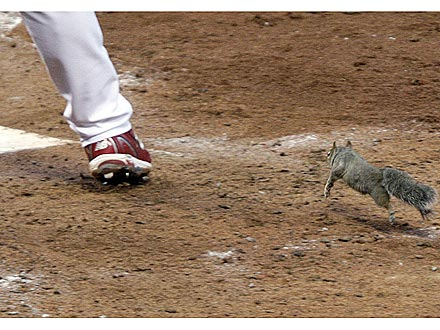 Squirrel Interrupts Baseball Playoff Game
