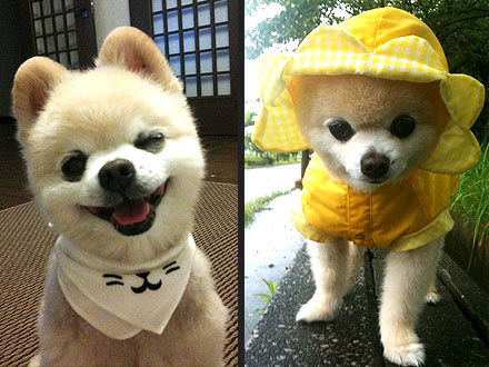 Shunsuke: Cute Dog on Twitter