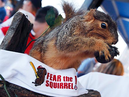 Rally Squirrel Pumps Up Cardinals Fans