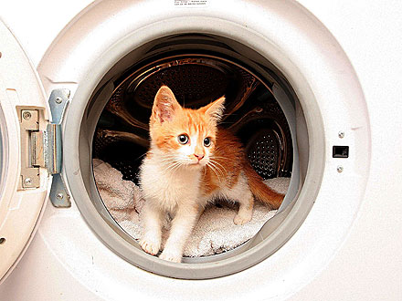 Kitten Gets Stuck in Washing Machine – and Survives!