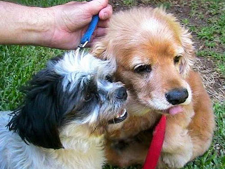 Adopt Me!  Once Neglected, Dogs Kade and Shoes Are Bonded for Life